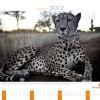 """40. Kalendarz wieloplanszowy """"Afryka 2012"""""""